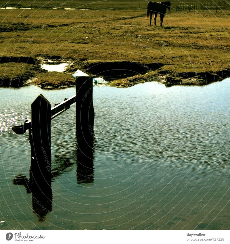 About water Horse Steppe Territory Field Pasture Meadow Fold Puddle Brook Reflection Waves Mammal River Level Lawn Watering Hole North Sea baltrum Island