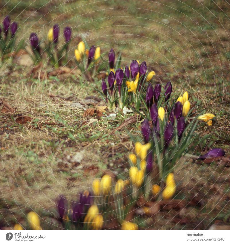 Beautiful Green Colour Joy Yellow Emotions Meadow Spring Garden Dream Growth Fresh Circle Beginning Lawn New