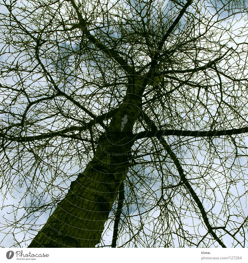Tree Plant Animal Wood Think Power Force Bushes Branch Connection Traffic infrastructure Upward Treetop Twig Muddled