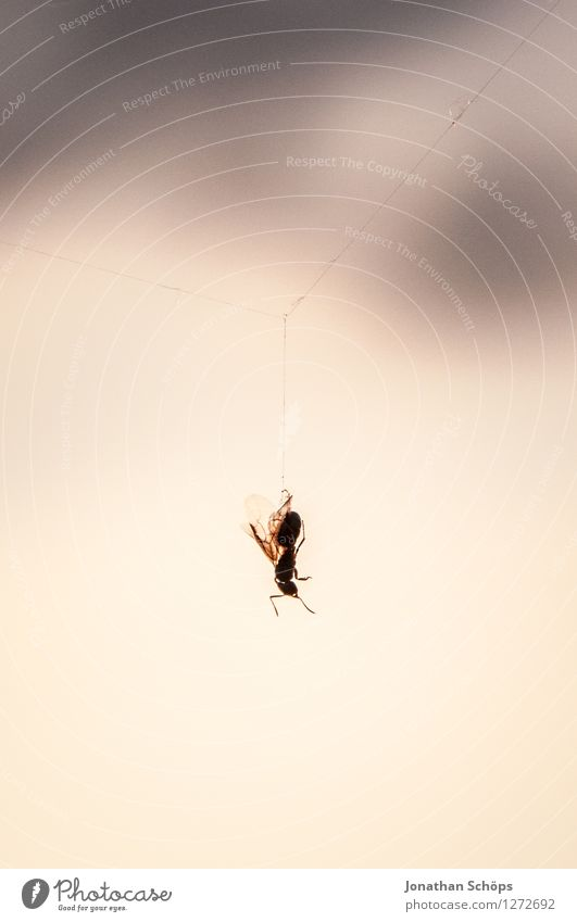 hang out for a while Animal Dead animal Fly Spider 1 Esthetic Threat Death Insect Spider's web Exterior shot Blur Detail Close-up Hang Downward Reduced