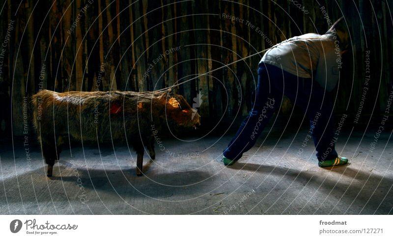 Animal Death Dark Funny Rope Meat Swine Animalistic Surrealism Effort Mammal Pigs Pull Long exposure Massive