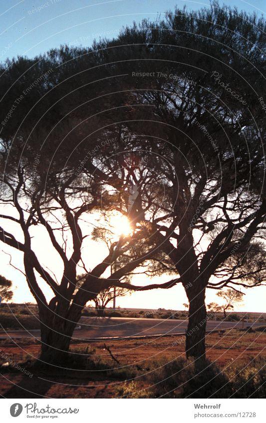 Nature Australia Outback