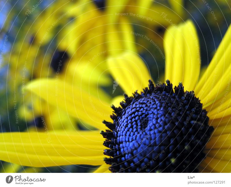 Flower Blue Summer Yellow Colour Meadow Blossom Glittering Force Blossoming Deep Flower meadow Pollen Pistil Blossom leave Plantlet