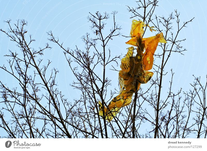 Sky Nature Tree Wood Stone Decoration Paper Bushes Cleaning Branch Flag Trash Hind quarters Statue Twig Destruction