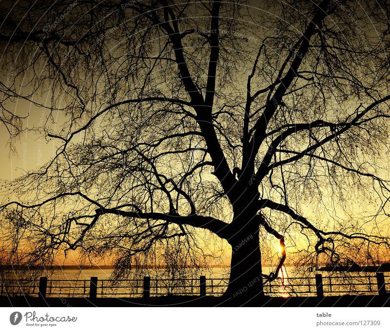 Sky Water Sun Joy Black Yellow Berlin Lake Gold Large Trip Lakeside Deciduous tree American Sycamore Großer Müggelsee Lake