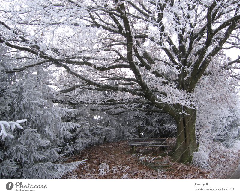 Nature Old Tree Winter Forest Landscape Cold Snow Lanes & trails Freedom Bright Ice Frost Bench Town
