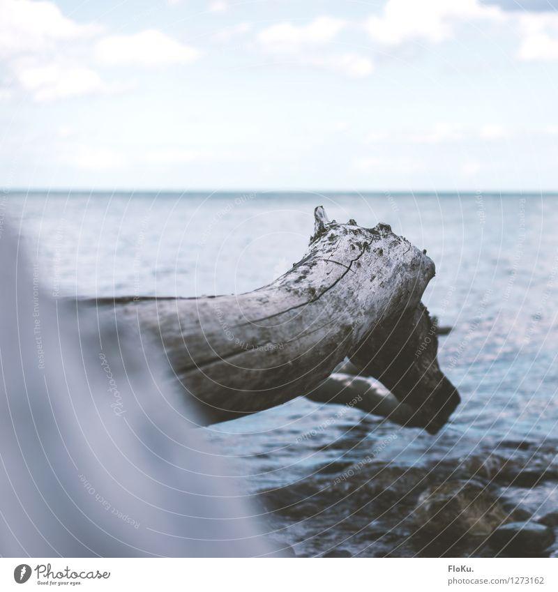 Sky Nature Vacation & Travel Blue Plant Tree Ocean Clouds Beach Environment Natural Coast Horizon Tourism Air Waves
