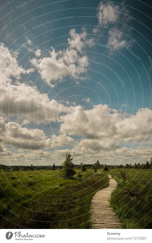 Sky Nature Vacation & Travel Blue Plant Green Summer White Tree Landscape Calm Clouds Meadow Lanes & trails Grass Gray