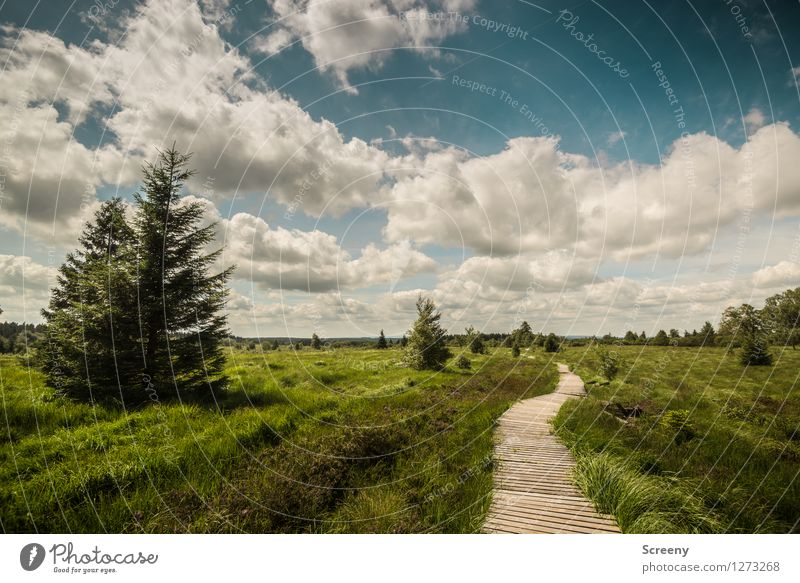 wander Vacation & Travel Tourism Trip Hiking Nature Landscape Plant Sky Clouds Sunlight Summer Beautiful weather Tree Grass Bushes Meadow Forest High Venn Eifel