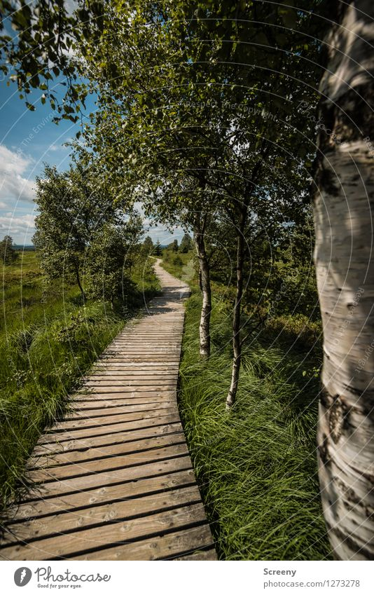 Sky Nature Vacation & Travel Blue Plant Green Summer White Tree Landscape Calm Clouds Lanes & trails Grass Brown Tourism