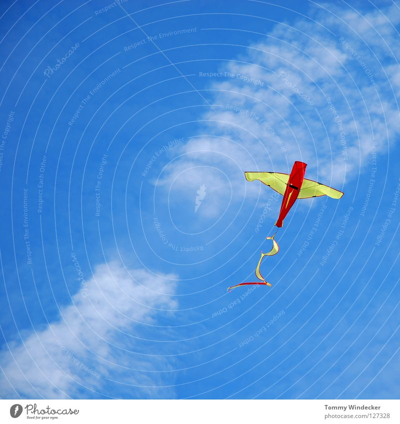 Sky Blue Beach Joy Clouds Autumn Playing Above Freedom Air Infancy Wind Leisure and hobbies Flying Free Airplane