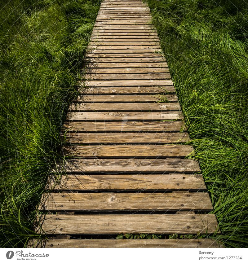 Nature Vacation & Travel Plant Green Summer Landscape Lanes & trails Grass Wood Brown Tourism Hiking Trip Beautiful weather Safety Footbridge