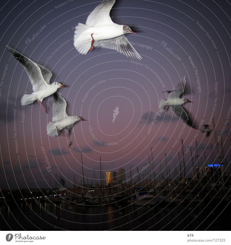 Water Sky Ocean Clouds Air Bird Flying High-rise Beginning Trip Aviation Target Violet Wing Harbour Airplane landing