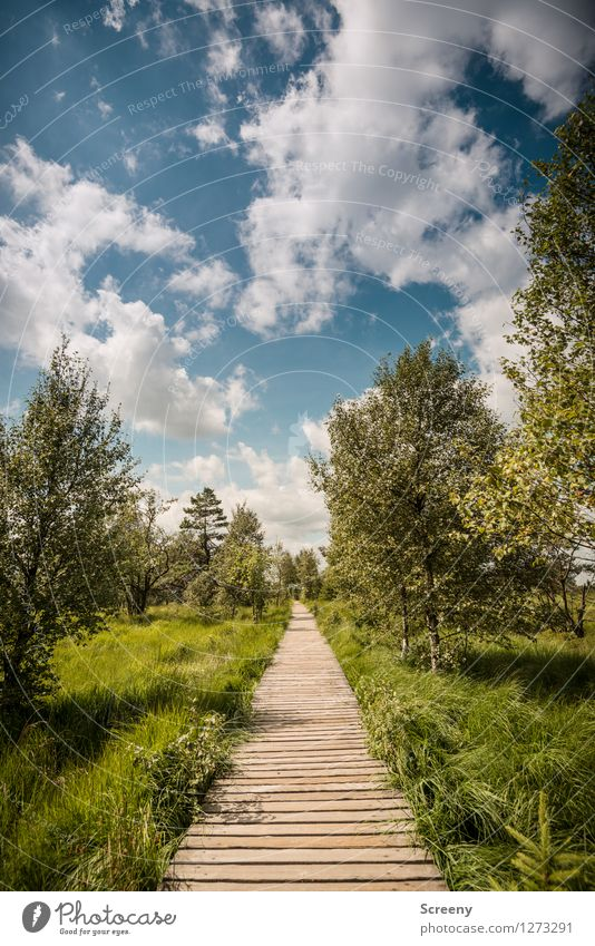 Sky Nature Vacation & Travel Blue Plant Green Summer White Tree Landscape Calm Clouds Meadow Lanes & trails Grass Wood