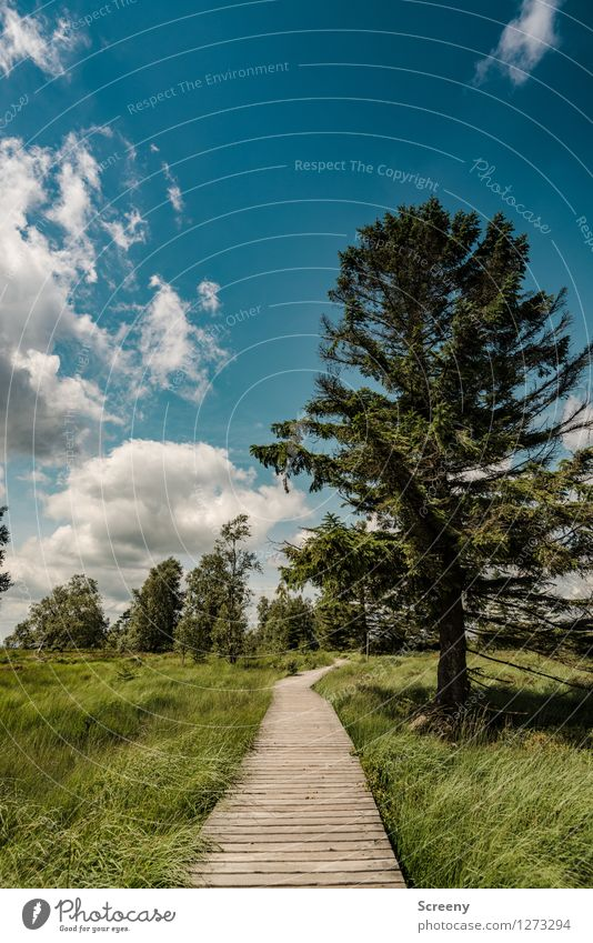 Sky Nature Vacation & Travel Blue Plant Green Summer Tree Landscape Calm Clouds Meadow Lanes & trails Grass Wood Brown