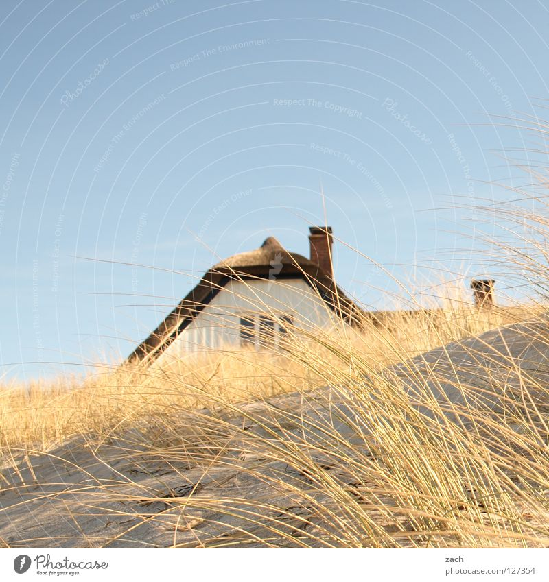 Ocean Beach House (Residential Structure) Coast Common Reed Beach dune Darss Dike Ahrenshoop