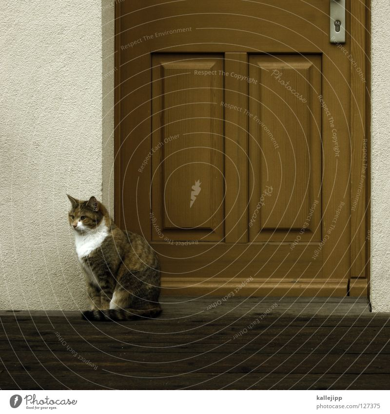 Cat Human being White Animal House (Residential Structure) Yellow Brown Door Flat (apartment) Wild animal Wait Stripe Hunting Entrance To feed Mammal