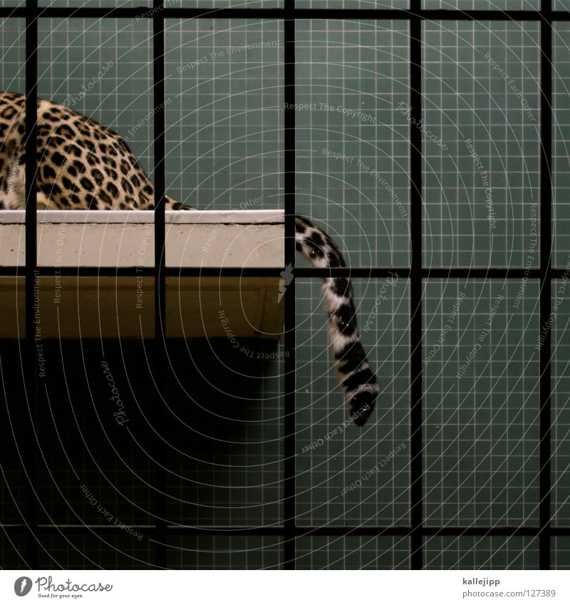 Cat Lie Posture Hind quarters Living thing Tile Zoo Mammal Grating Captured Tails Section of image Partially visible Cage Panther Anguish