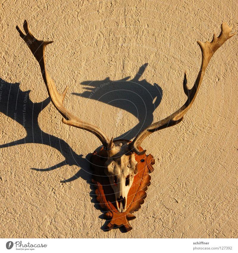 Dead Jägermeister Antlers Headdress Hunter Fallow deer Deer Venison goulash Skeleton Shadow Wall (building) Hang Moody Mammal Wall decoration eightpointer