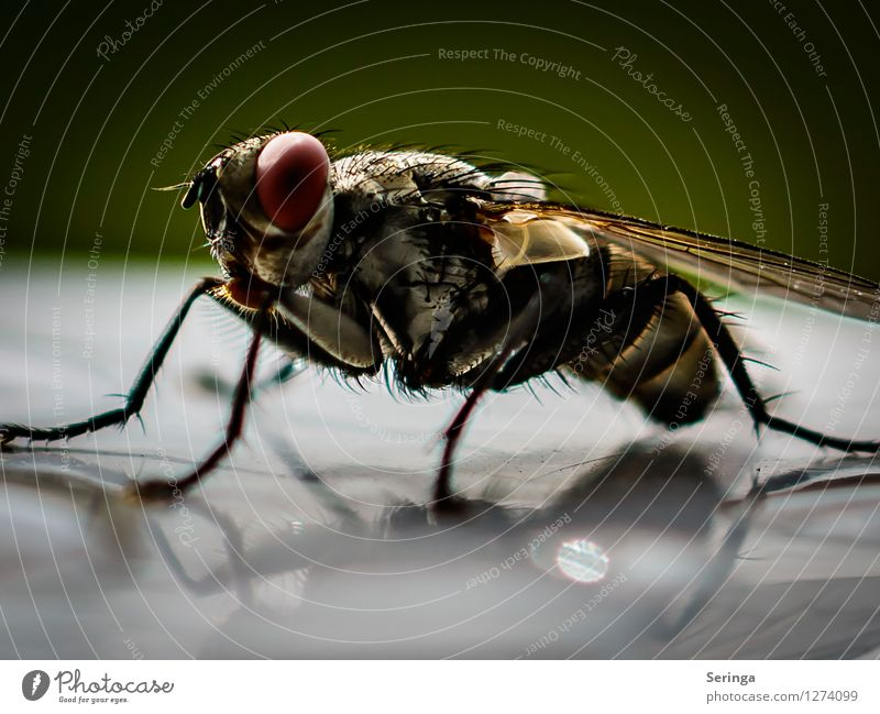 Look at me Nature Plant Animal Garden Park Meadow Fly Animal face Wing 1 Flying Insect Colour photo Multicoloured Exterior shot Close-up Detail