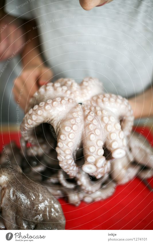Octopus 1 Seafood Squid A Royalty Free Stock Photo From Photocase