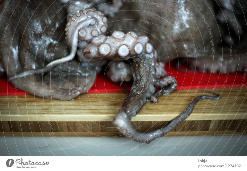 Octopus 4 Food Seafood Squid Burl Nutrition Wild animal Dead animal octopus Group of animals Lie Disgust Naked Wet Natural Suction pad low in squid Heap