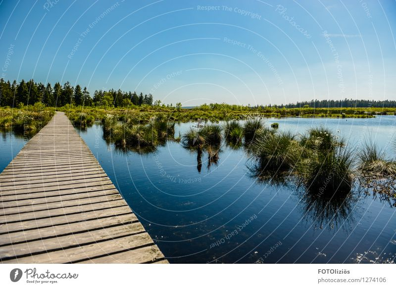 High Venn Environment Nature Landscape Plant Water Sky Cloudless sky Summer Beautiful weather Grass Bushes Bog Marsh Footbridge Fantastic Blue Green Esthetic