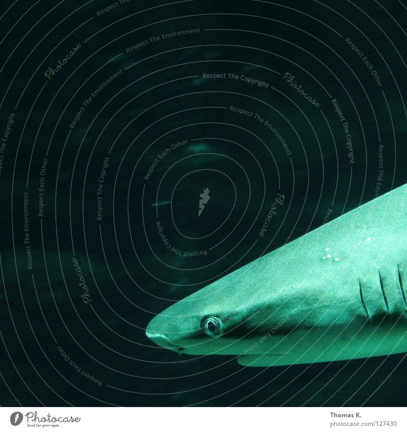 Water Ocean Swimming & Bathing Electricity Fish Dive Fishing (Angle) Bubble To feed Breathe Aquarium Water wings Shark Angler Fisherman Thrill