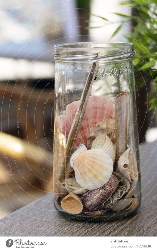 Collected memories Vacation & Travel Tourism Trip Far-off places Summer Summer vacation Sun Sunbathing Beach Ocean Mussel Garden Furniture Table Decoration