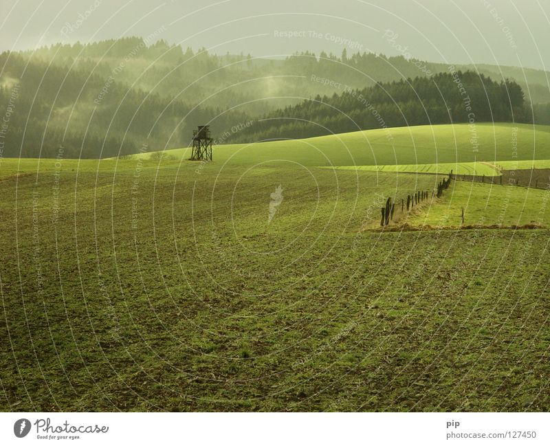 grassland Field Meadow Grass Green Green undertone Pasture Sowing Plant Calm Harmonious Fence Barrier Border Forest Leaf Wood Plantation Coniferous forest