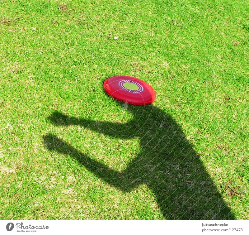 The world is a disc Frisbee Silhouette Green Red Grass Discus Playing Headache Joy Window pane Shadow Sun Garden shadow boxing Loudspeaker Juttas snail Funny
