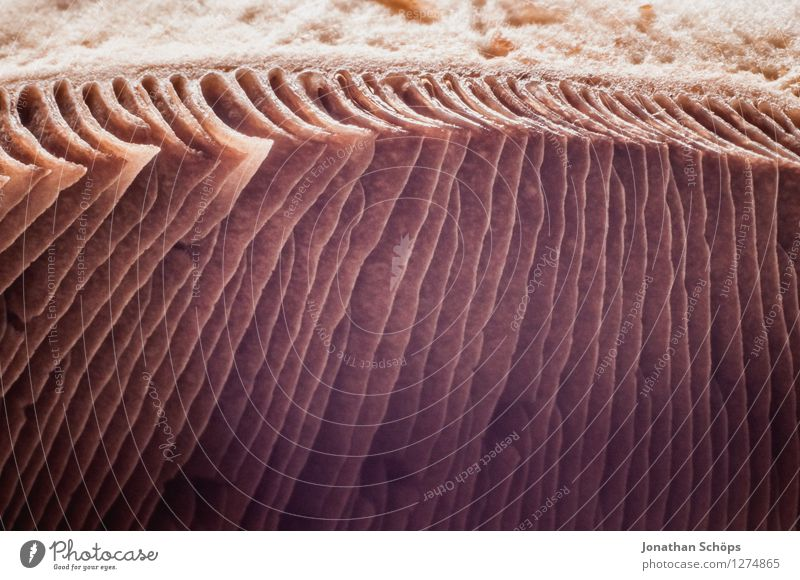 Healthy Eating Food photograph Small Brown Esthetic Nutrition To enjoy Cooking & Baking Stripe Delicious Discover Organic produce Mushroom Sharp-edged