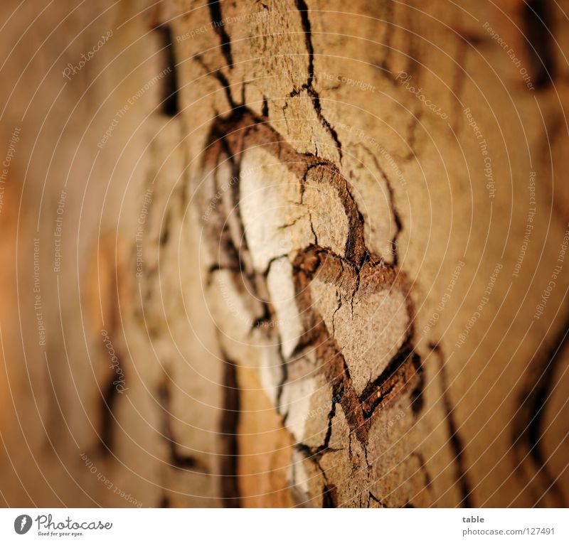 Tree Joy Love Emotions Wood Happy Couple Dream Together Heart Future In pairs Hope Sign Tree trunk Trust