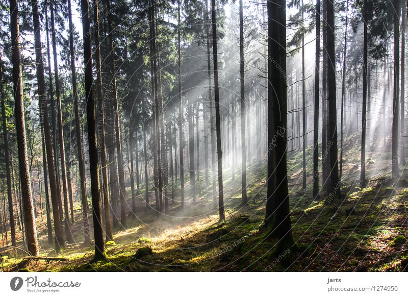 Nature Plant Tree Landscape Calm Forest Environment Spring Autumn Grass Natural Bright Glittering Contentment Fresh Power