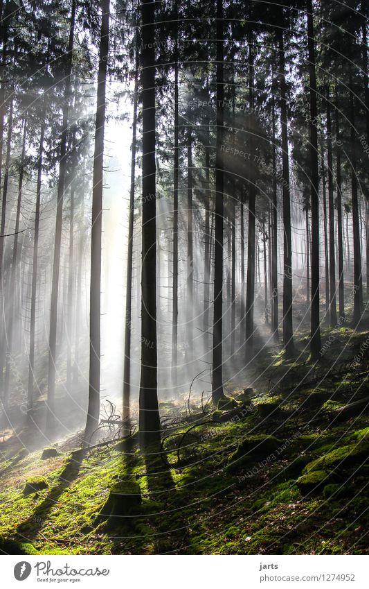 Nature Plant Sun Tree Landscape Calm Forest Environment Spring Autumn Natural Bright Illuminate Fog Fresh Power