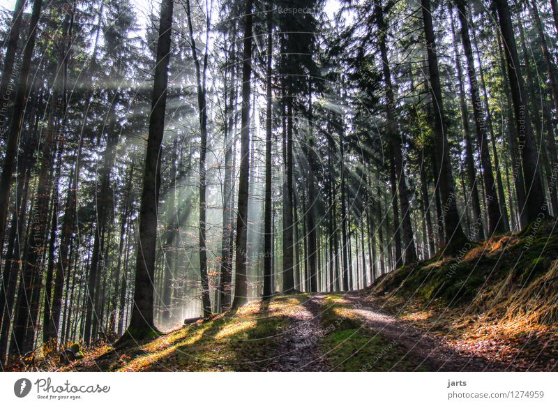 Nature Plant Beautiful Tree Landscape Calm Forest Environment Lanes & trails Natural Bright Fresh Beautiful weather Hope Serene Patient