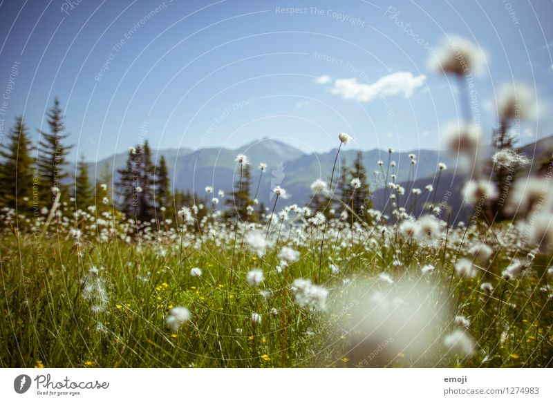 alpine meadow Environment Nature Landscape Plant Spring Summer Beautiful weather Flower Meadow Natural Blue Green Colour photo Exterior shot Deserted Day