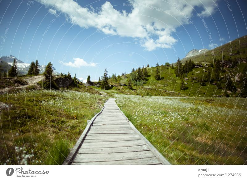 in the green Environment Nature Landscape Sky Spring Summer Autumn Beautiful weather Meadow Hill Mountain Natural Blue Green Hiking Footpath Tourism Switzerland