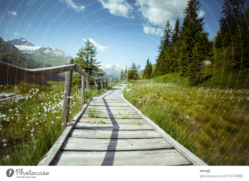 Nature Green Summer Landscape Environment Meadow Lanes & trails Natural Field Beautiful weather Footpath Alps Footbridge Switzerland Destination Hiking trip