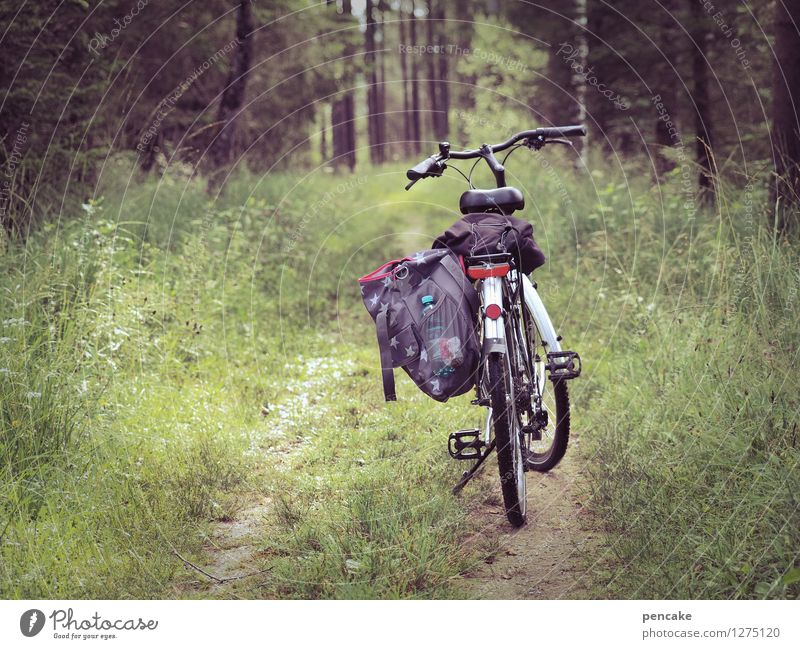 extend radius Cycling tour Nature Landscape Summer Forest Discover Relaxation Driving Fitness Hiking Freedom Leisure and hobbies Joy Tourism Luggage Bicycle