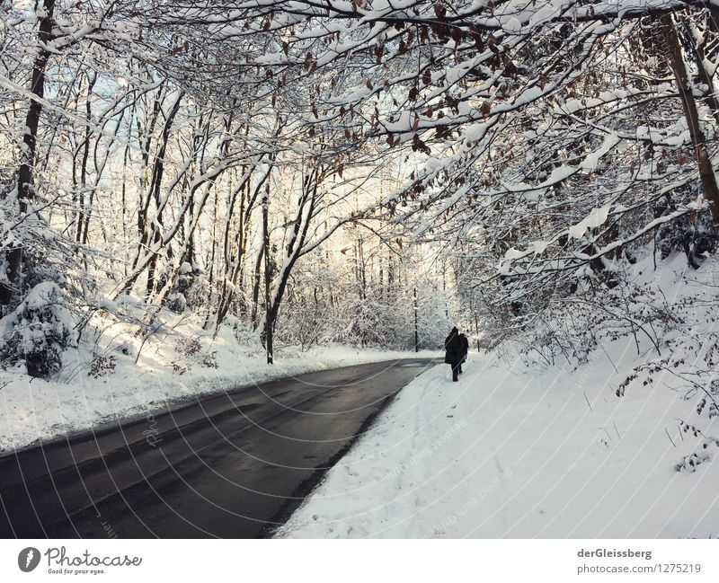 Snow landscape with road Hiking 1 Human being Nature Landscape Winter Weather Beautiful weather Ice Frost Tree Forest Munich Avenue Street Pedestrian Walking