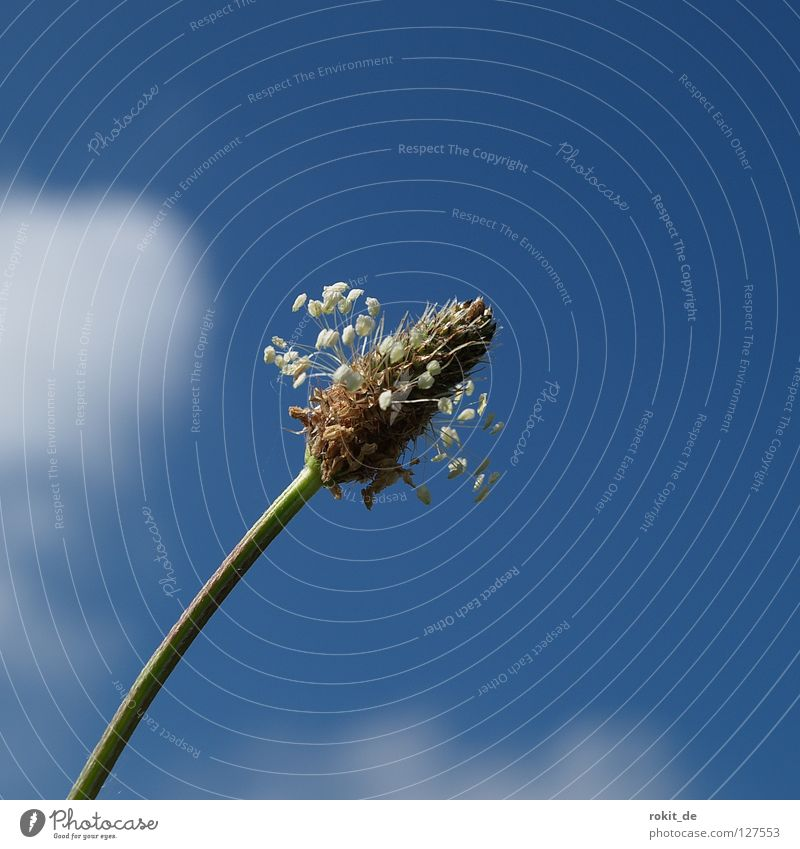 Sky Blue Green Flower Clouds Meadow Grass Blossom Healthy Dirty Cleaning Blossoming Stalk Rotate Obscure Arrange