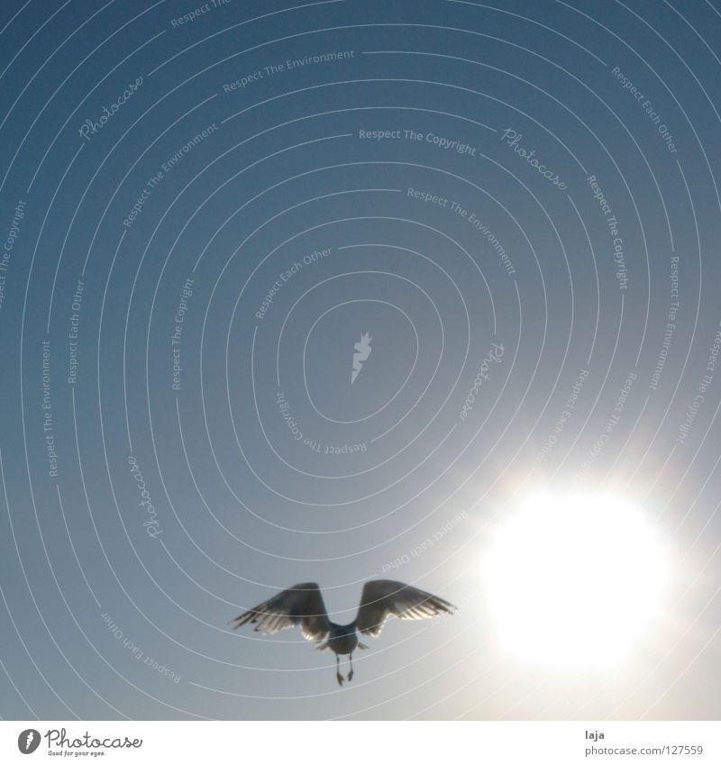 Sky Sun Ocean Blue Summer Beach Freedom Bird Flying Aviation Wing Beautiful weather Seagull