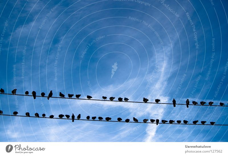 Sky Blue Calm Clouds Relaxation Above Line 2 Together Bird Flying Electricity Multiple Break Cable Observe