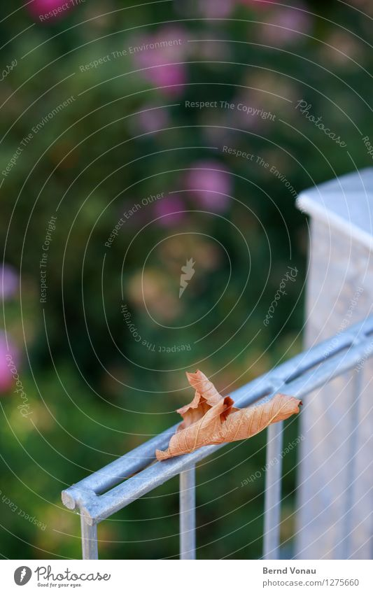 the autumn timeless Summer Leaf Blue Brown Green Silver Moody Fence Metal Cold Death Limp Structures and shapes Rod Autumn Autumn leaves Colour photo