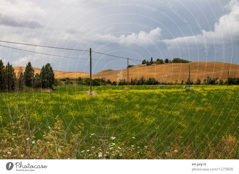 Sky Nature Vacation & Travel Plant Summer Landscape Healthy Eating Environment Meadow Grass Energy industry Field Growth Italy Hill