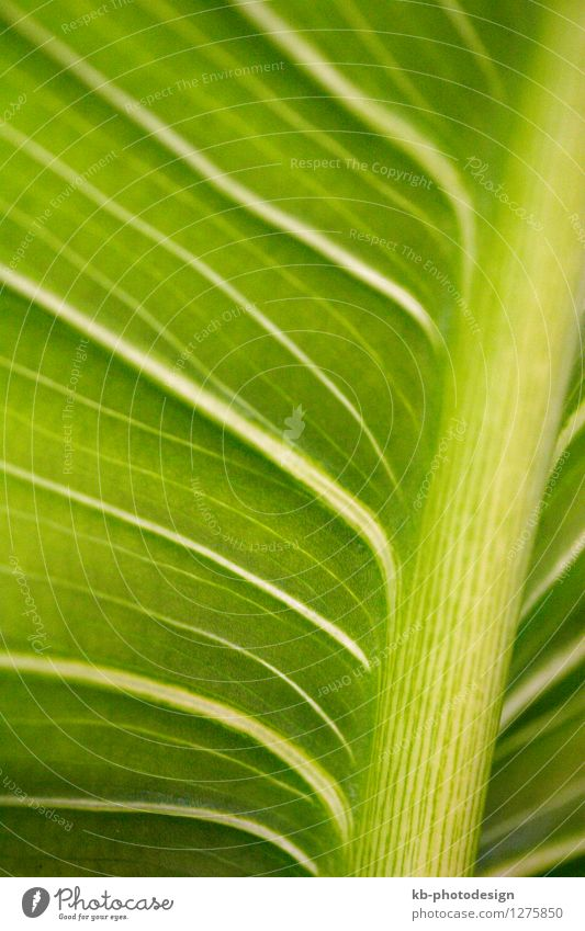 Close-up of a palm leaf Design Vacation & Travel Tourism Summer vacation Nature Animal Plant Palm tree Green Background picture beautiful decoration freshness