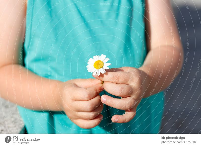 Small girl with a beautiful daisy Summer Child Feminine Toddler Hand 1 Human being 1 - 3 years Nature Plant Flower Jump Yellow agriculture bloom sun organic