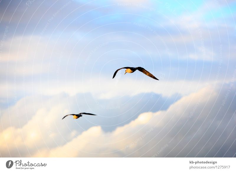 Seagulls flying through clouds in the sky Vacation & Travel Wild animal Bird Wing 2 Animal Pair of animals Flying beach holiday blue relaxation recreation