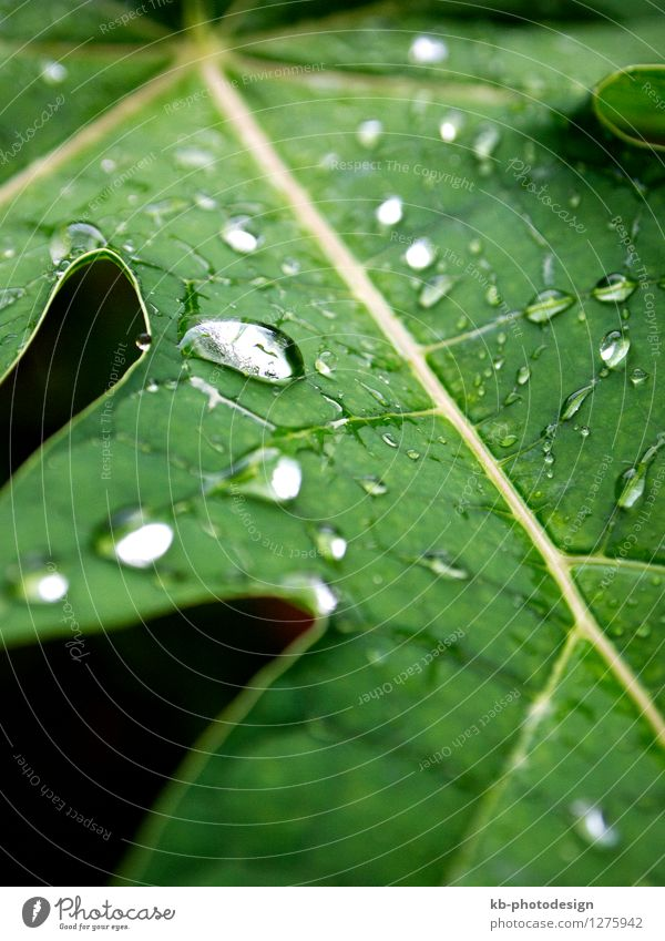 Closeup of water drops on a green leave after rain Wellness Harmonious Well-being Relaxation Calm Nature Animal Bad weather Rain Plant Foliage plant Park Drop